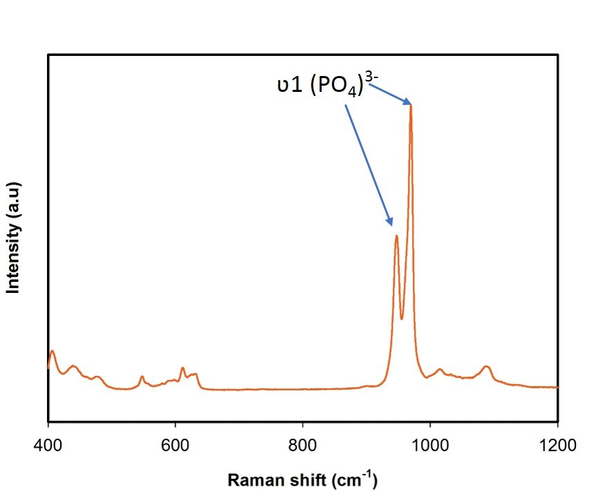 Raman spectrum of β-TCP nanoparticles.