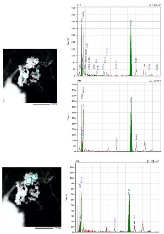 TEM-EDX of MQDs-Bright Green nanoparticle showing elemental maps of specific elements. Scale bar represents 100 nm size