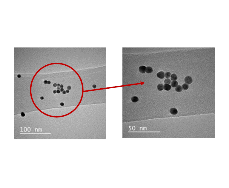 TEM images show the size  of spherical colloidal gold nanoparticles are 13 nm.
