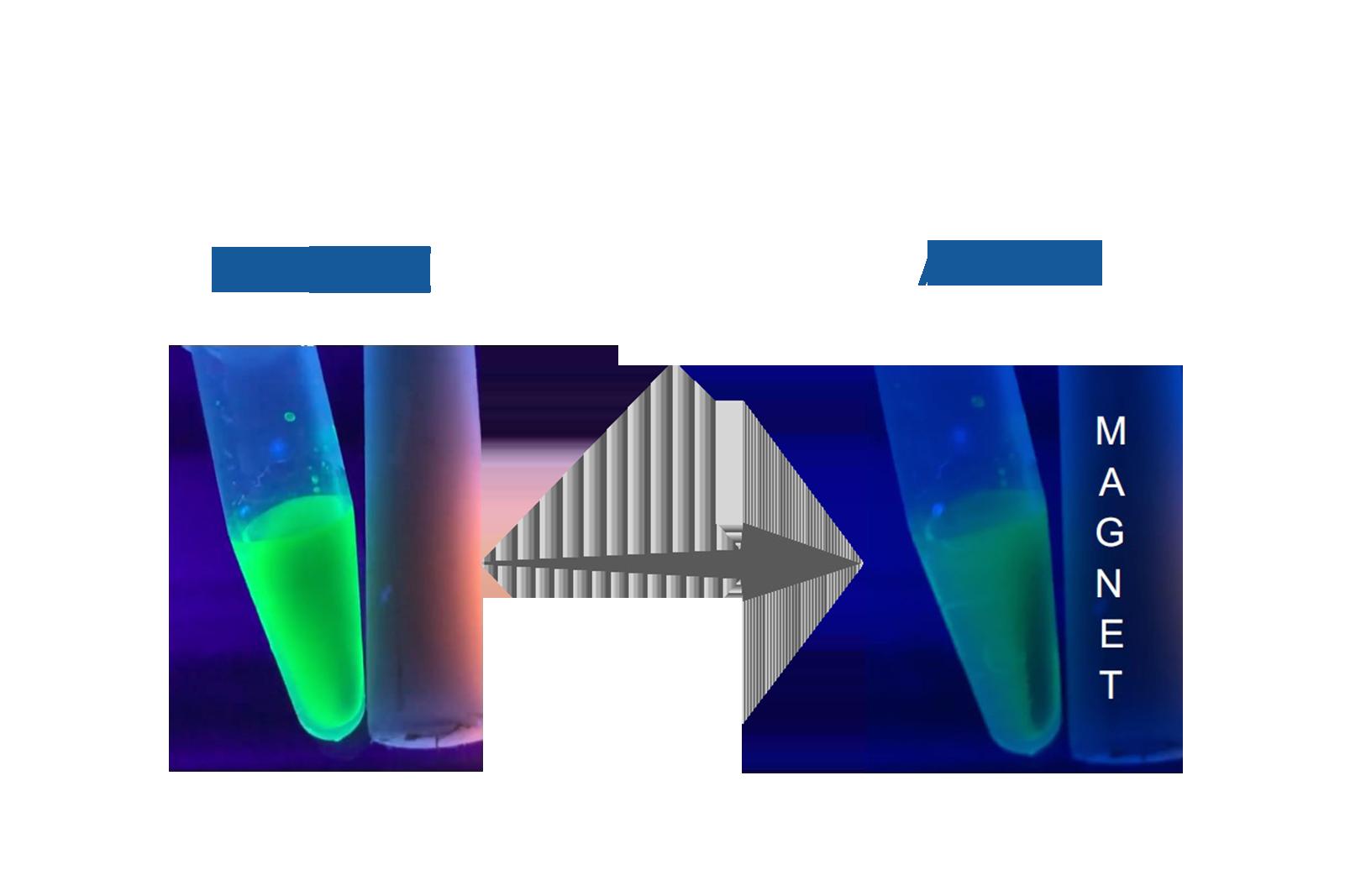 Bright Green CdSe Based Quantum Dots (Magnetic)