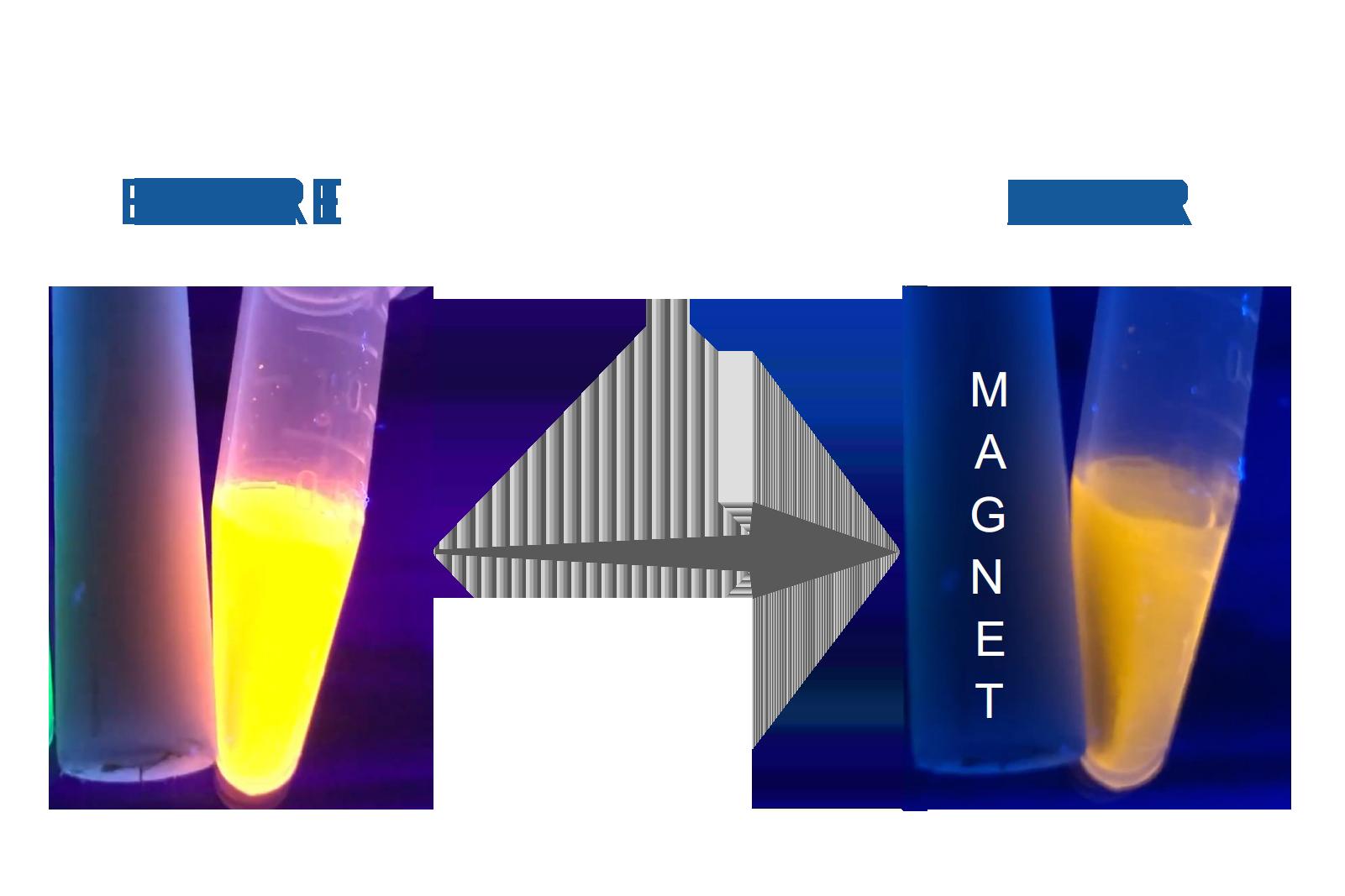 Bright Orange CdSe Based Quantum Dots (Magnetic)