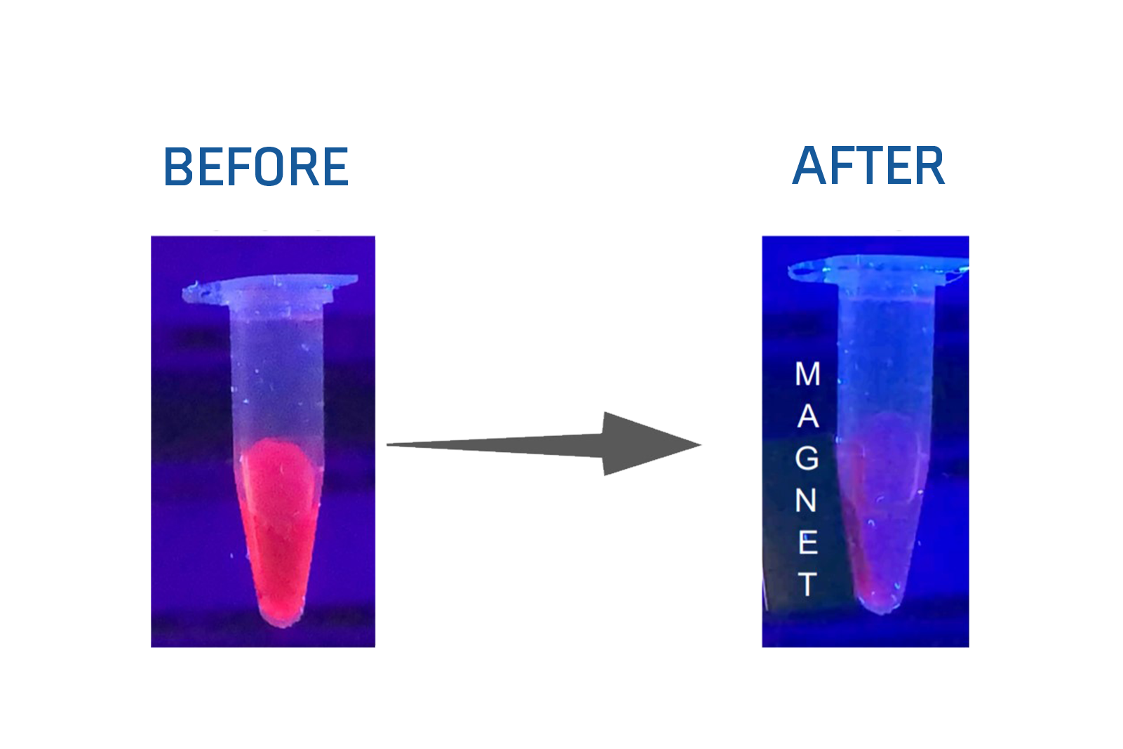 Bright Red CdSe Based Quantum Dots (Magnetic)